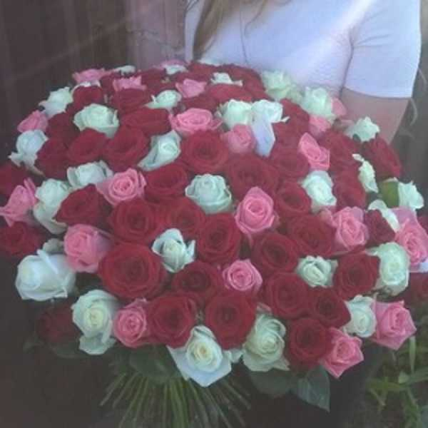 101 роза красного, белого, розового цветов