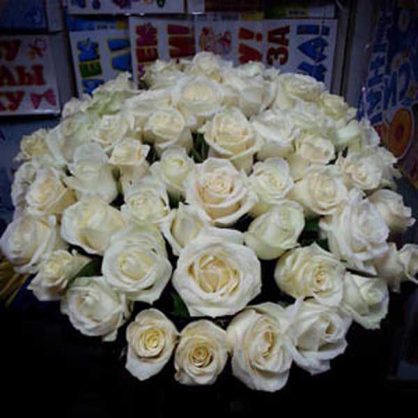 51 белая роза сорта аваланш