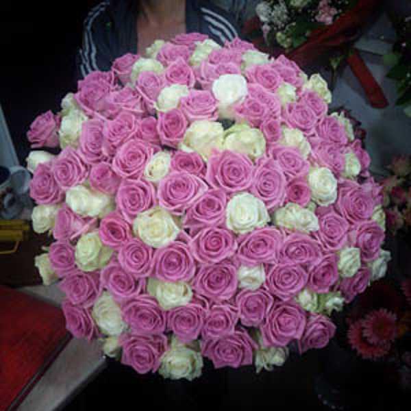 101 роза белого и розового цвета