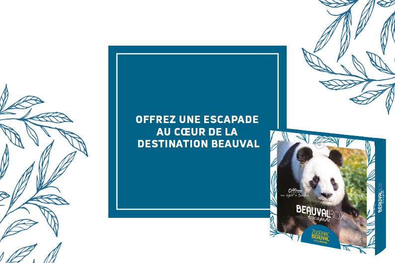 Beauval Box – offrez une escapade au cœur de la Destination Beauval