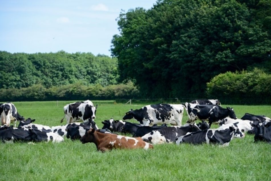 Cows For Food Matters