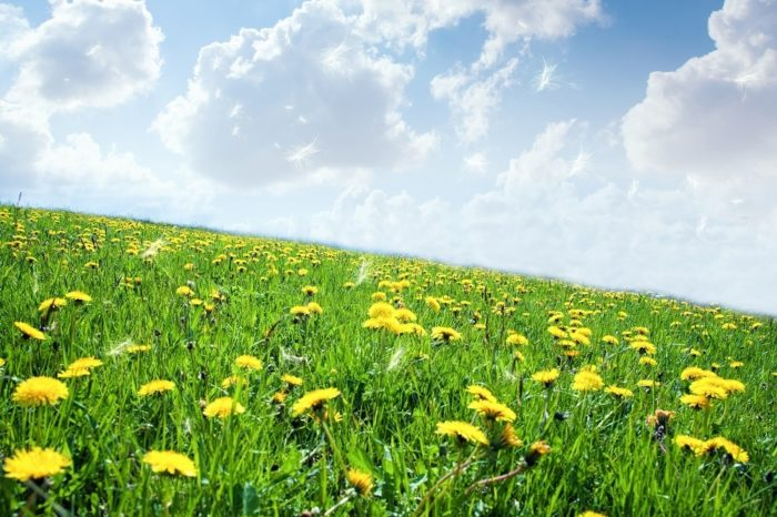 Hay-Fever-Promotional-Post-Image-SMALL.jpg