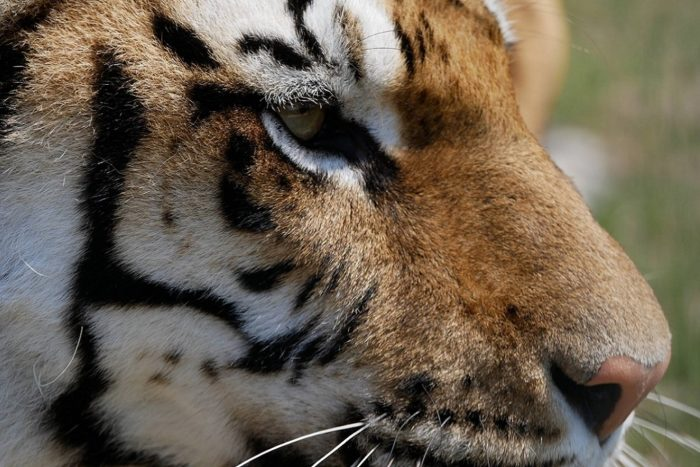 Lincolnshire-Wildlife-Park-submitted-2.jpg