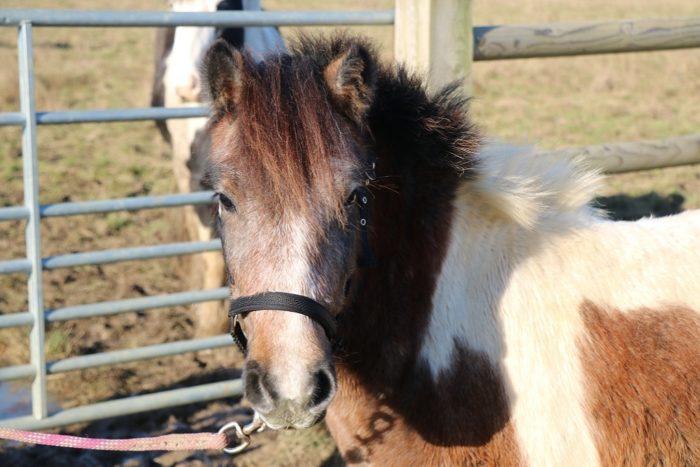 York-at-Bransby-Horses.JPG