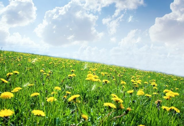 Coronavirus vs hay fever: know the difference