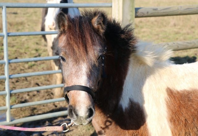 A second chance for equines in need