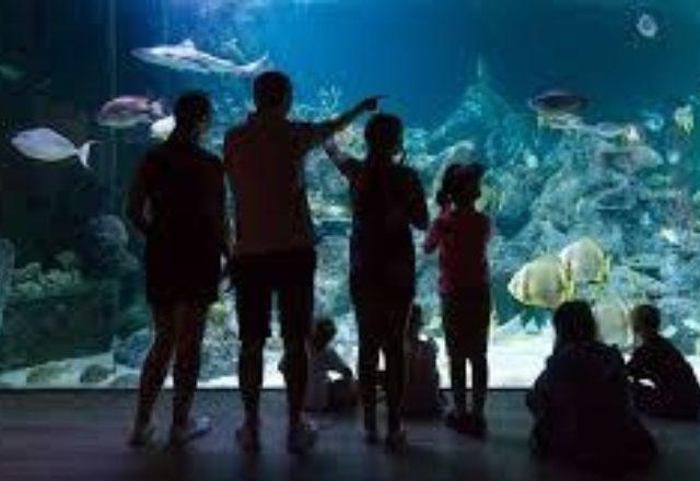 20% off Skegness Aquarium image