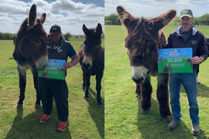 Donkeys-intranet.jpg
