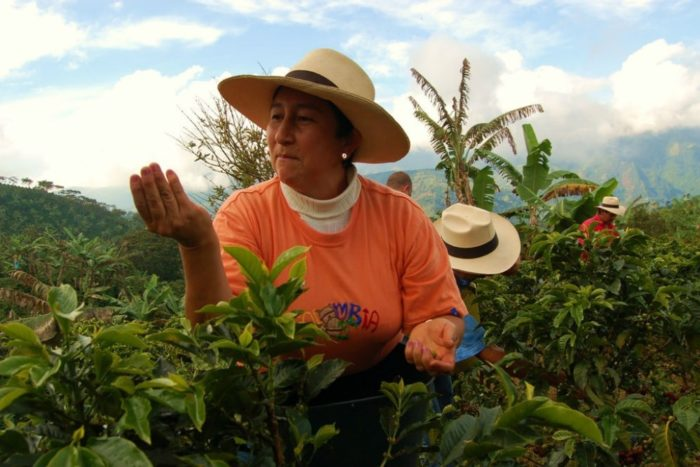 Rosa-grows-Fairtrade-coffee2.jpg