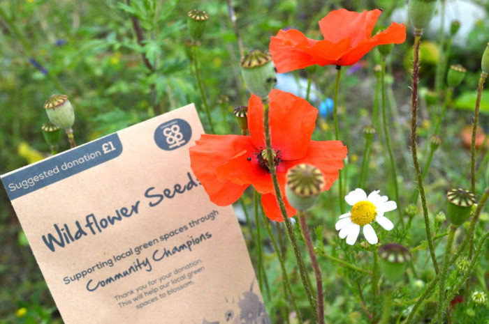 Seed-packets-picture-3.JPG