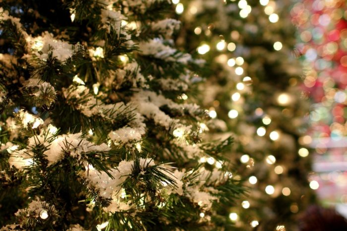 Tree-lights.jpg