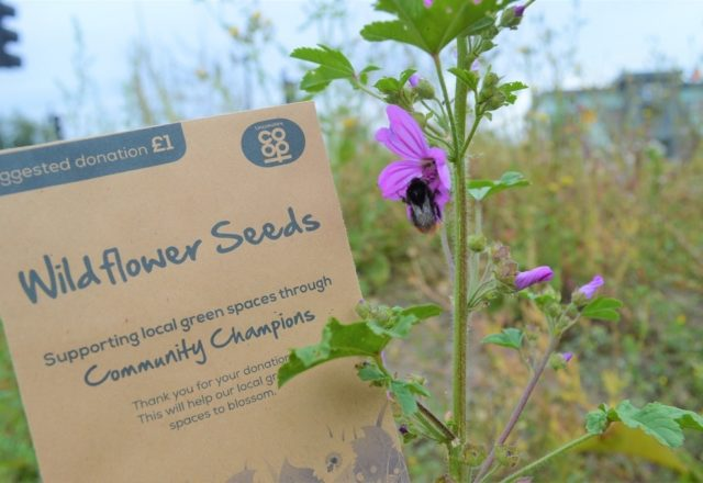 Helping green spaces blossom