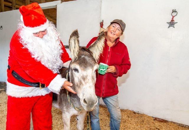 Meet Alan the Christmas donkey