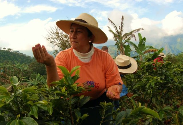 Supporting 'tea-riffic' Fairtrade producers