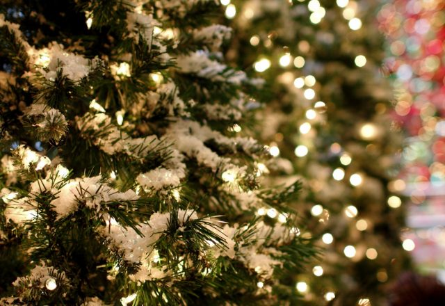 Memorial Christmas trees launched