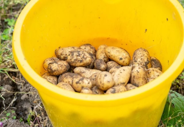 What is food sustainability?