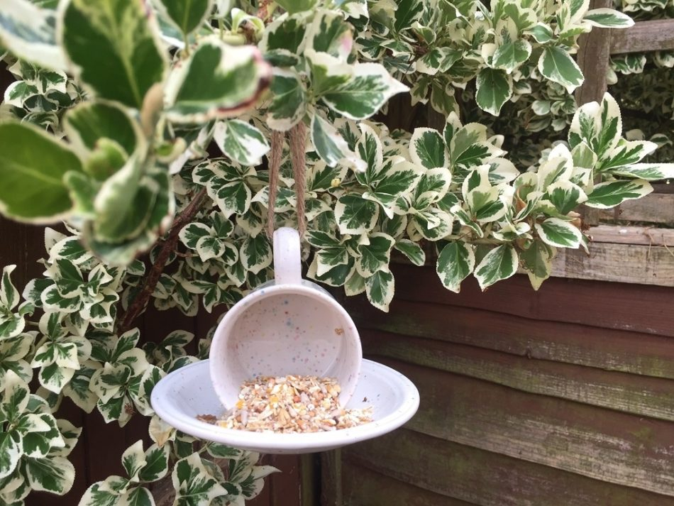 Bird Feeder In Action