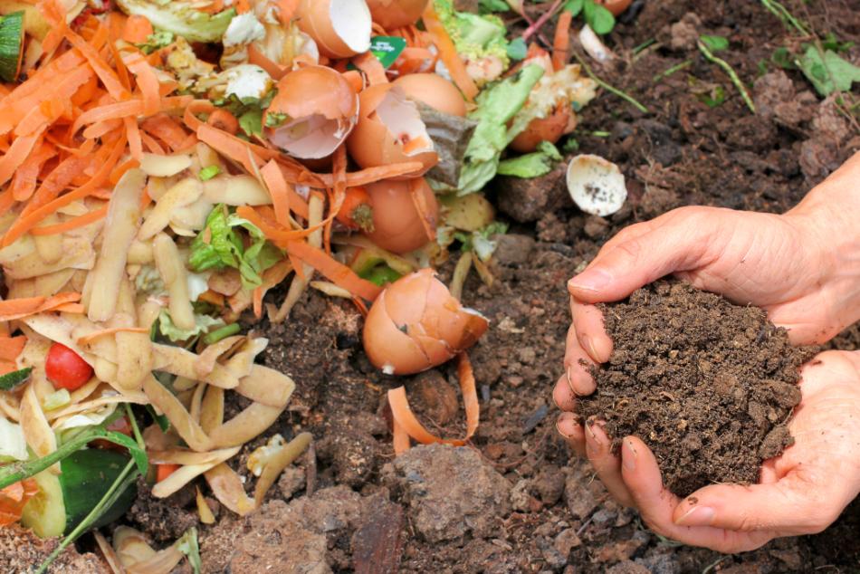 Eggshells Compost