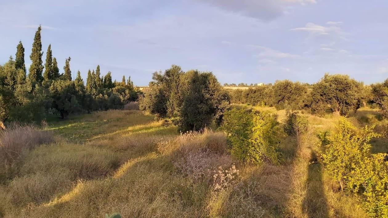 Prodej a koupě nemovitostí v Cité 7 Novembre 3. Prodej pozemku 20000m² v Cité 7 Novembre 3 - Tunisko - Prodej pozemku a dalších nemovitostí v - Tunisko, 4.2.2020 1706164