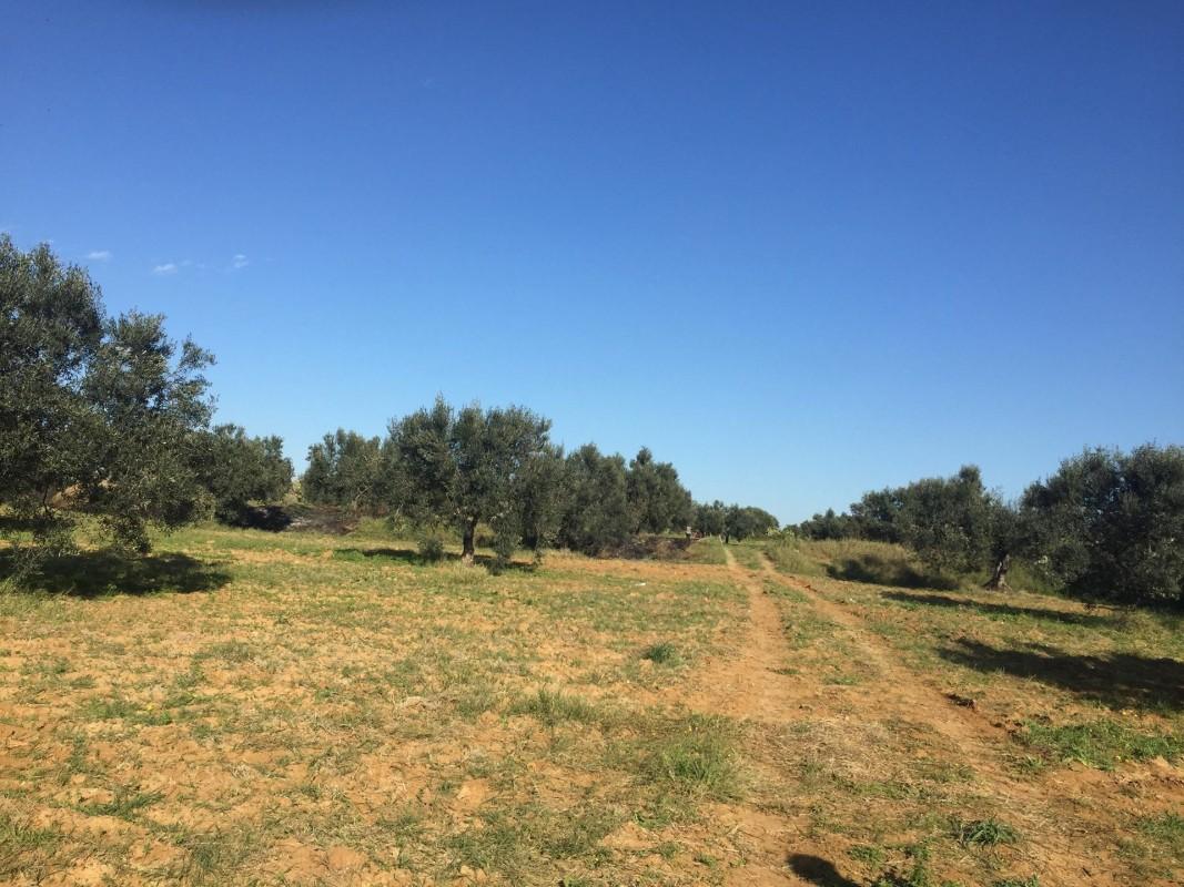 Купить участок земли Уарданин Тунис,. Продаётся участок земли в Уарданин. 4.2.2020 1706174