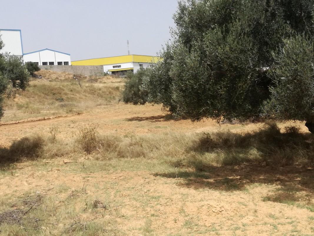 Tomt till salu Akouda Tunisien. Tomt 60000m² i Akouda till salu - ligger mot öst, north orientering, sydlig riktning, västläge, utsikt över havet 4.2.2020 1706192. Bostäder till salu i Akouda Tunisien