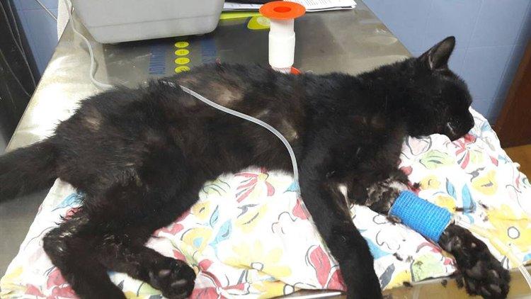 Hospital veterinario para los animales de la protectora LARA