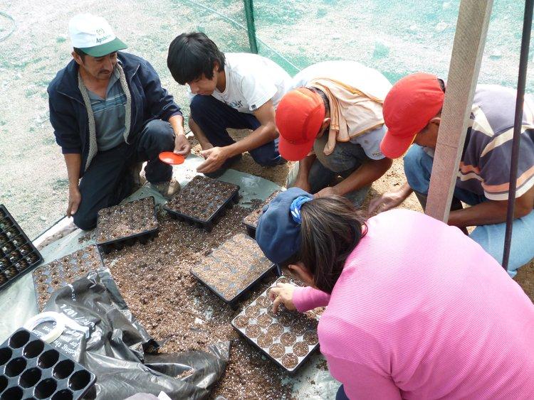 Riforestiamo l'Amazzonia Peruviana ettaro dopo ettaro