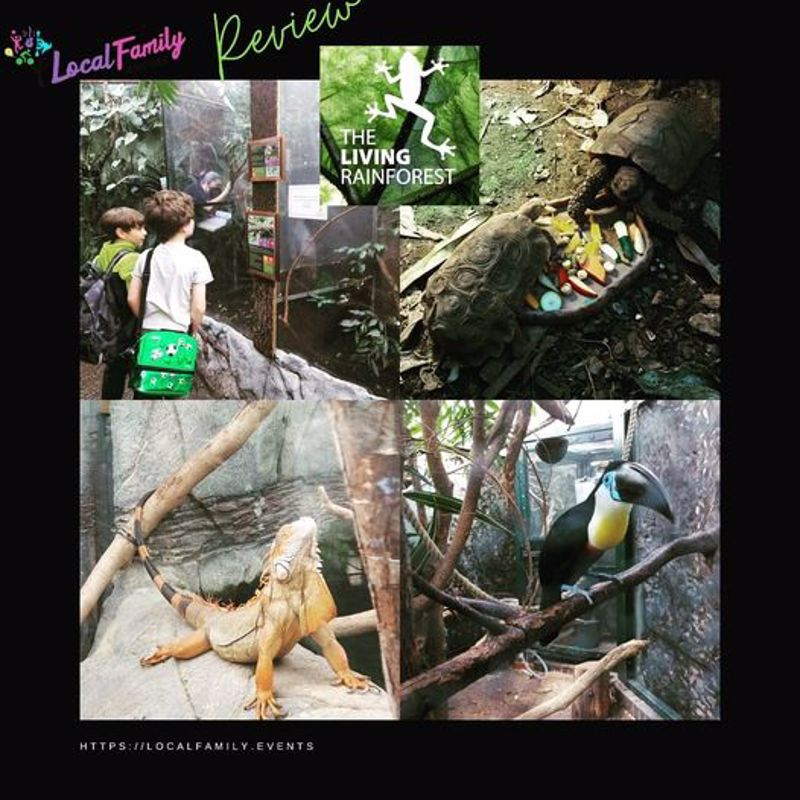 localfamily.events review of the living rainforest
