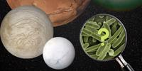 RAS Bicentenary Lecture: From Microbes to Mars 1pm & 6pm
