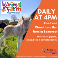 Free virtual farm tours every day at 4pm