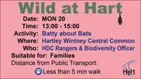 Batty about Bats - Hartley Wintney