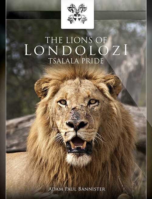 LIONS-BLACK-adam