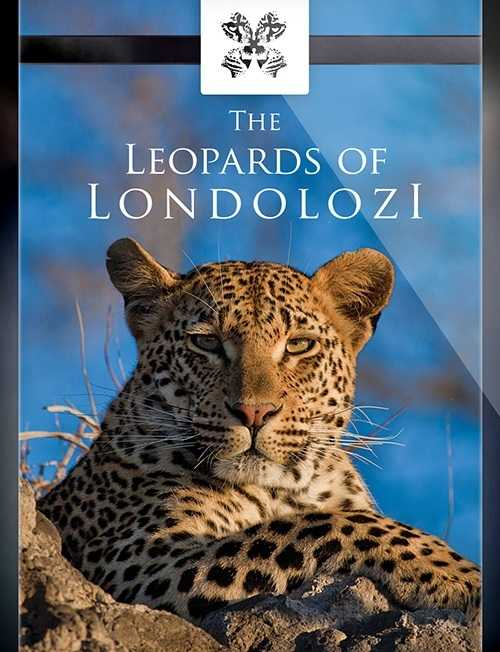 Leopards-of-Londolozi