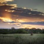 Male Lion sunset Rich Laburn