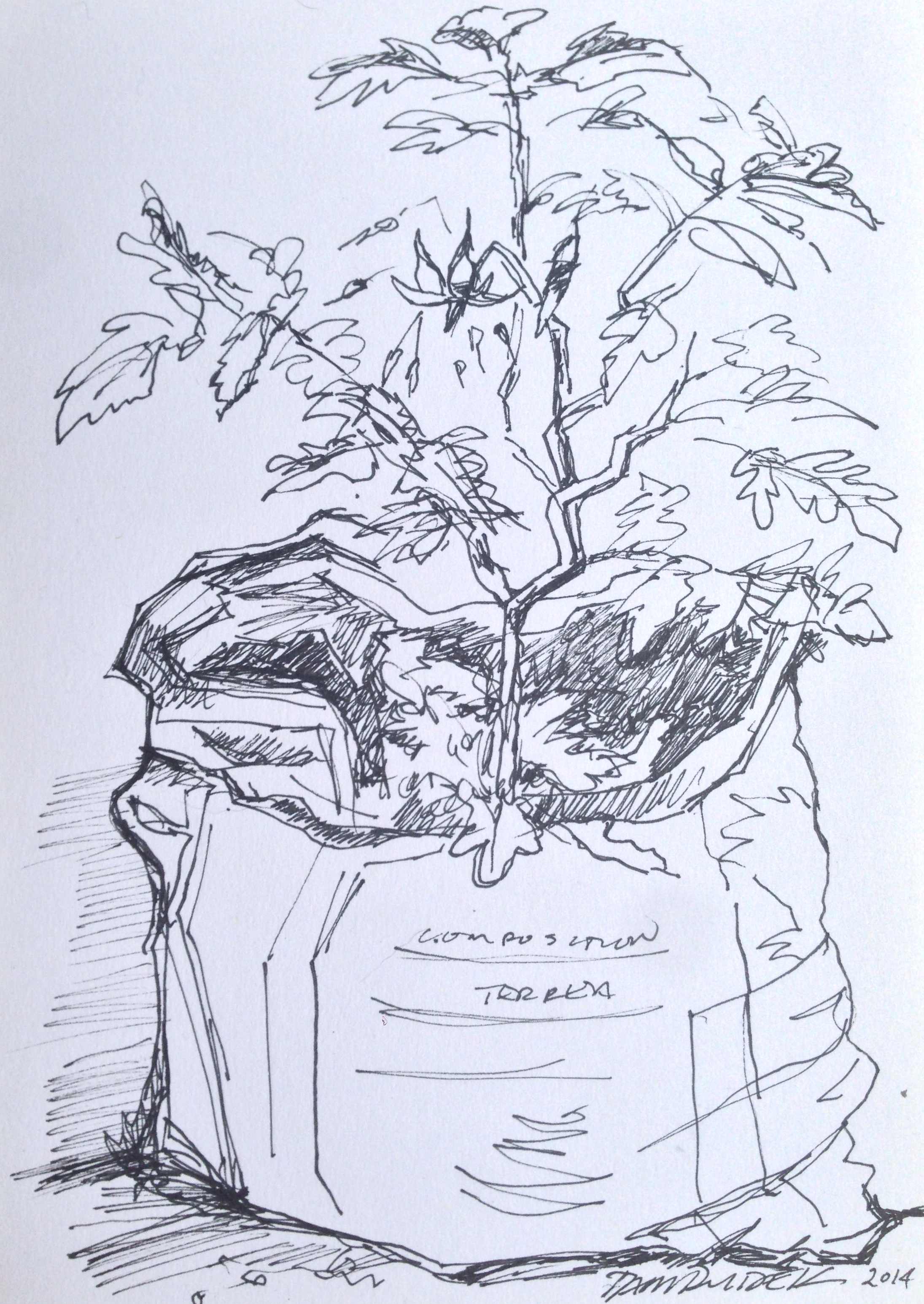 Lot 3 - Dawn Dudek Tomato Plant thriving in a Bag of Dirt. Ink on card. Executed 2014 and signed on