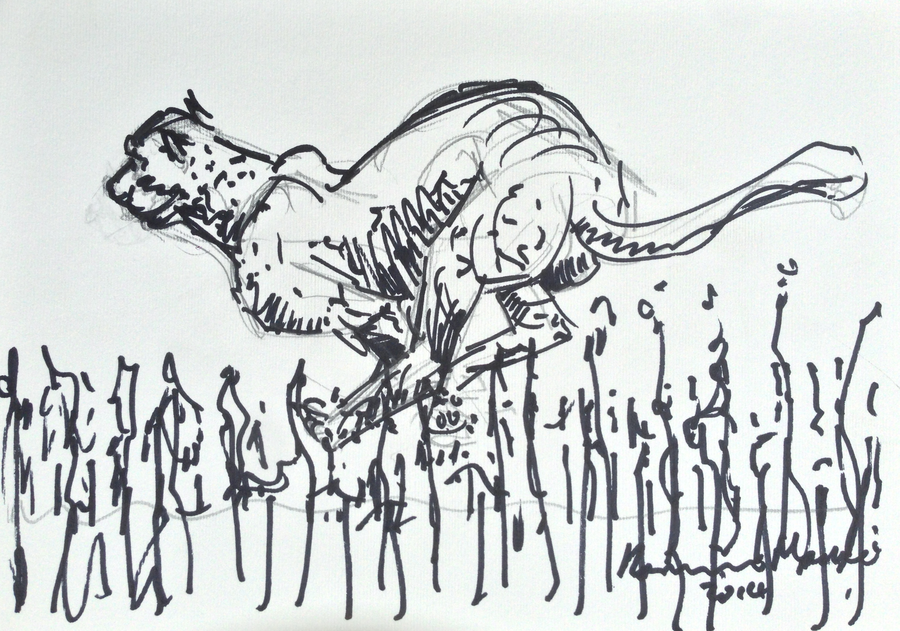 Lot 32 - Hamish Mackie Running Cheetah signed and dated 2014, pencil underneath felt pen, 17.5 x 25cm.