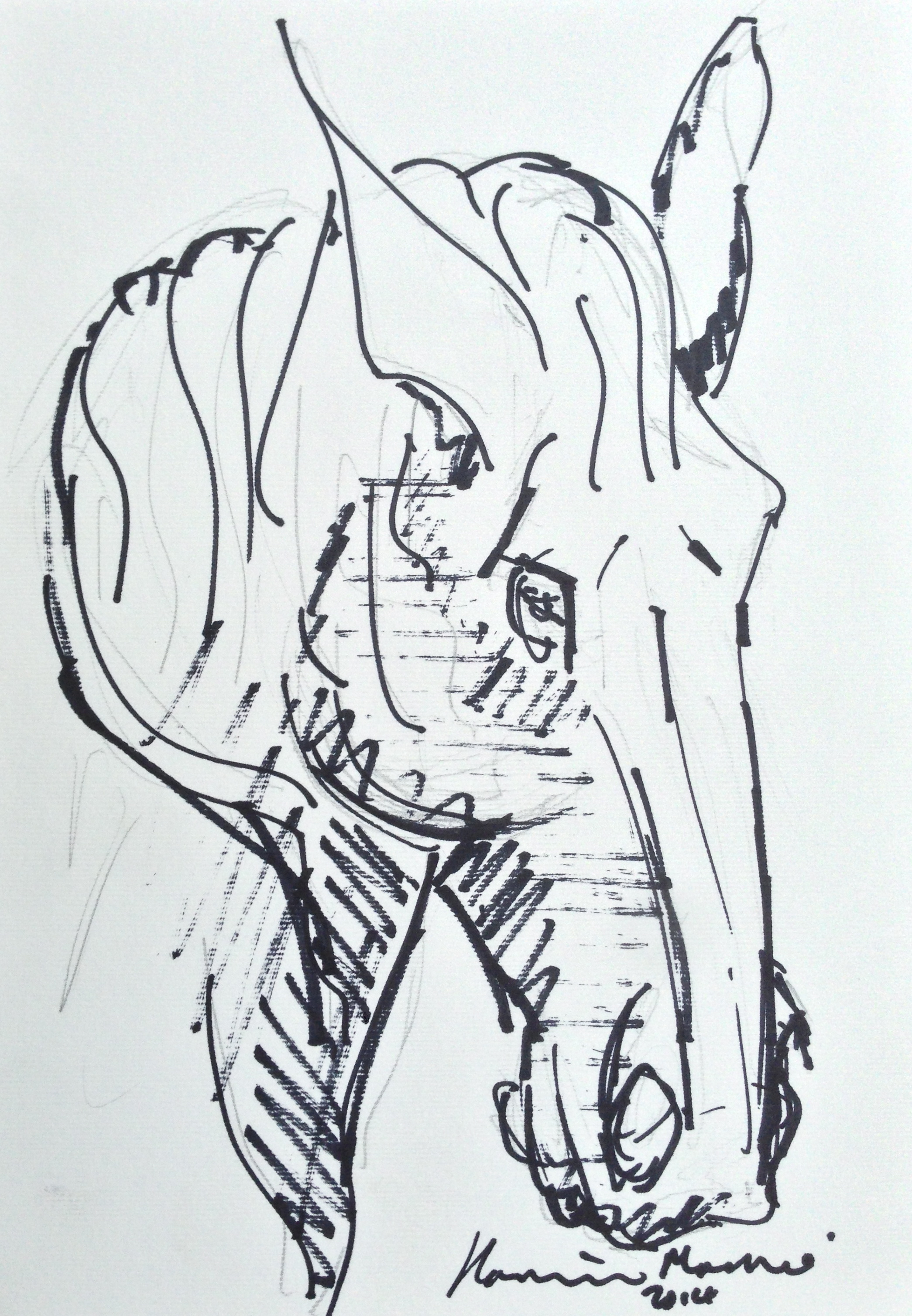 Lot 33 - Hamish Mackie Head of a Horse signed and dated 2014, pencil underneath felt pen, 24.5 x 17.5cm.