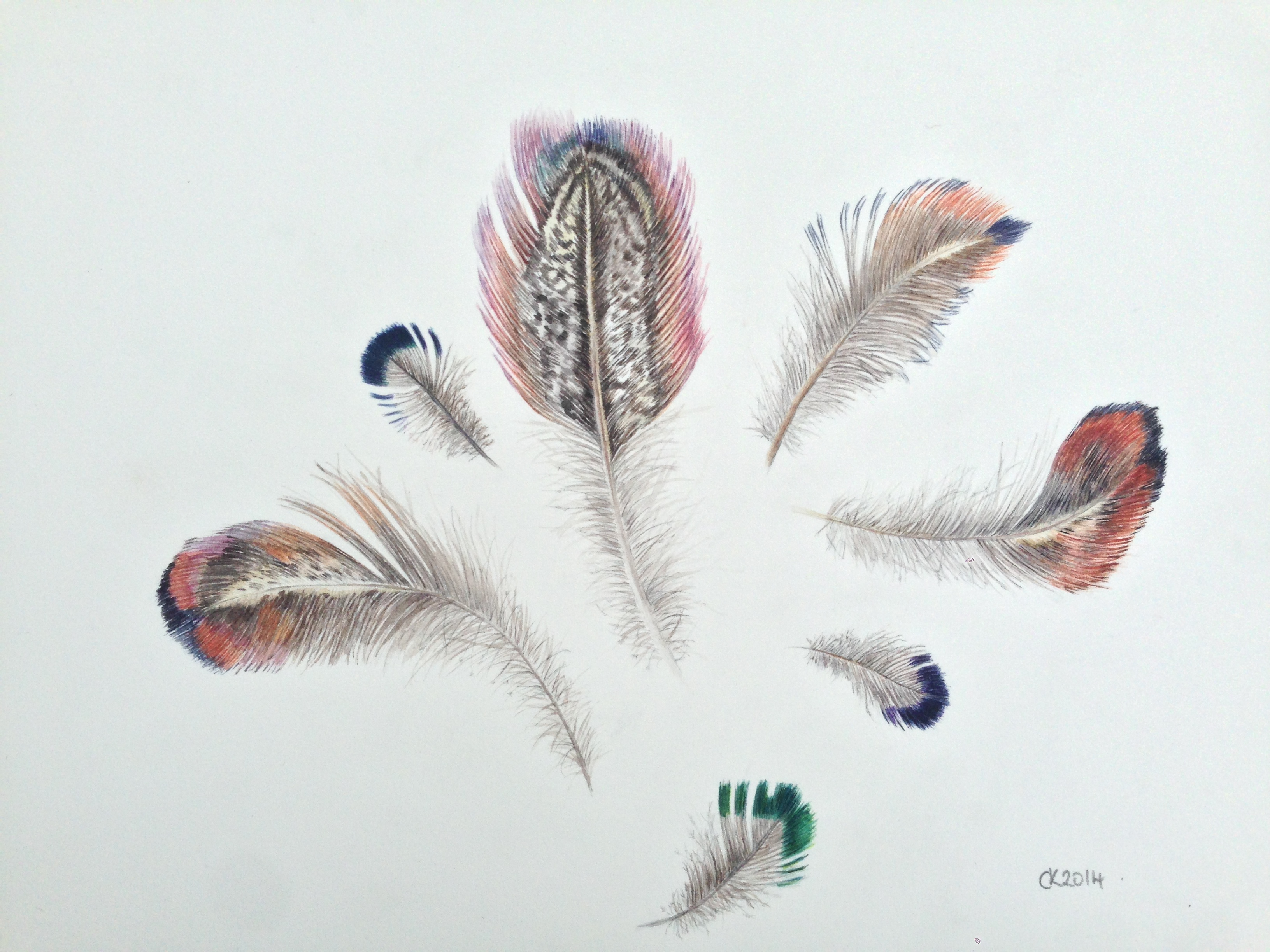 Lot 34 - Candida Kelly Pheasant Feathers signed with initials and dated 2014; inscribed, inscribed with