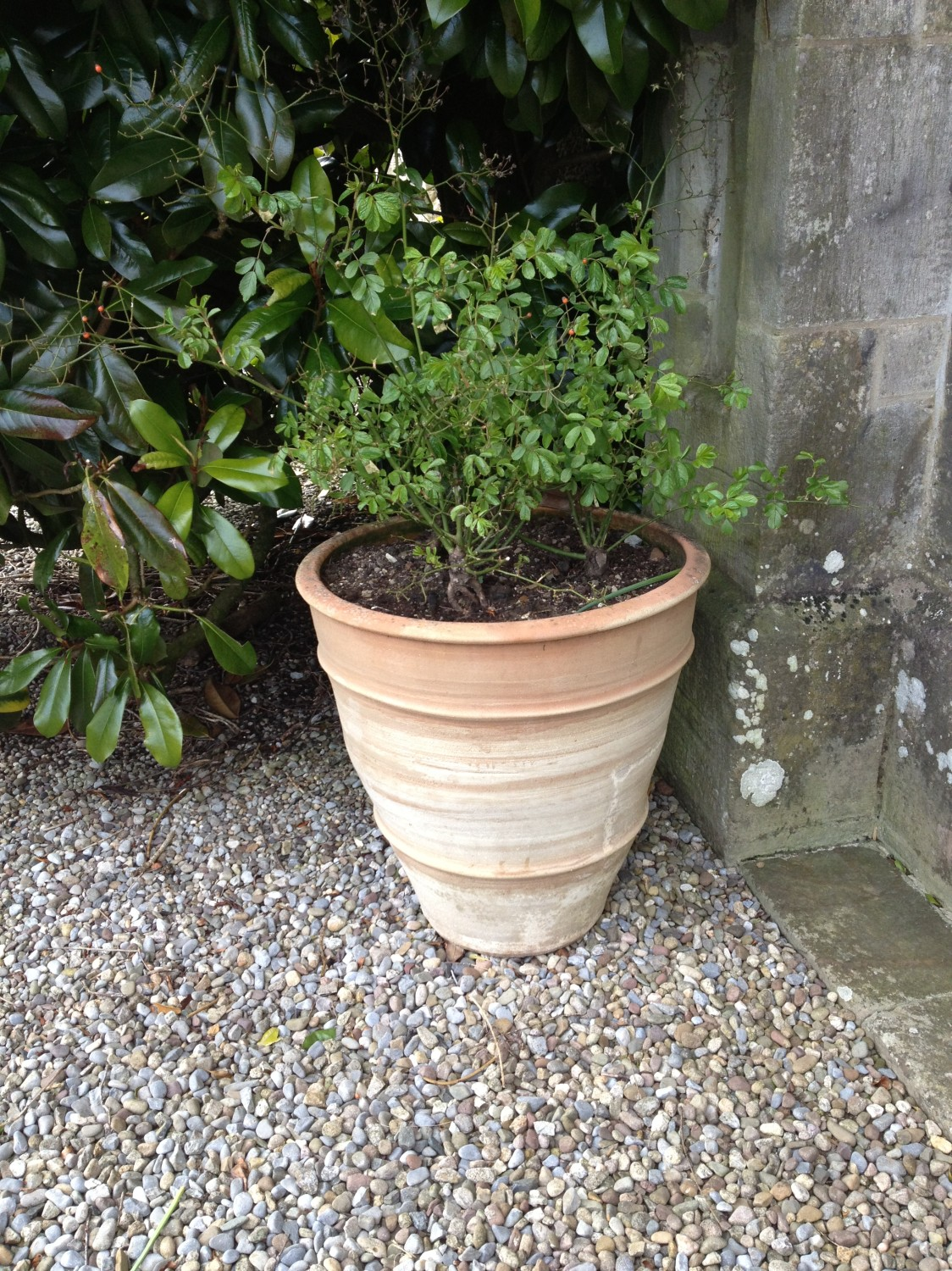 Lot 46 - A pair of large terracotta Garden Planters. (2)
