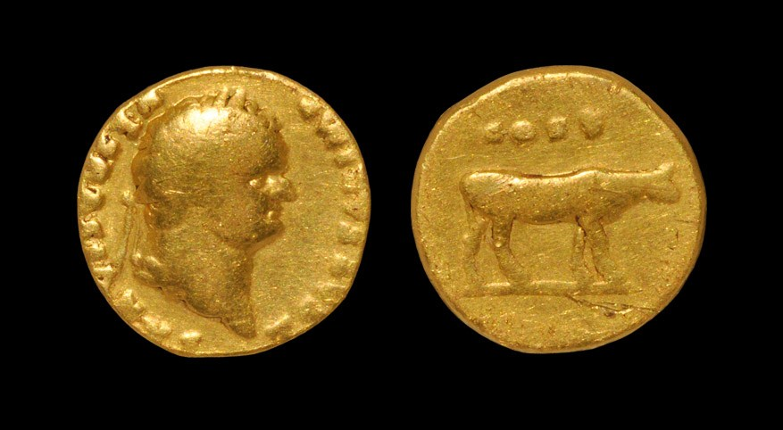Roman Titus - Cow Standing Gold Aureus 76 AD, Rome mint. Obv: T CAESAR IMP VESPASIAN legend with