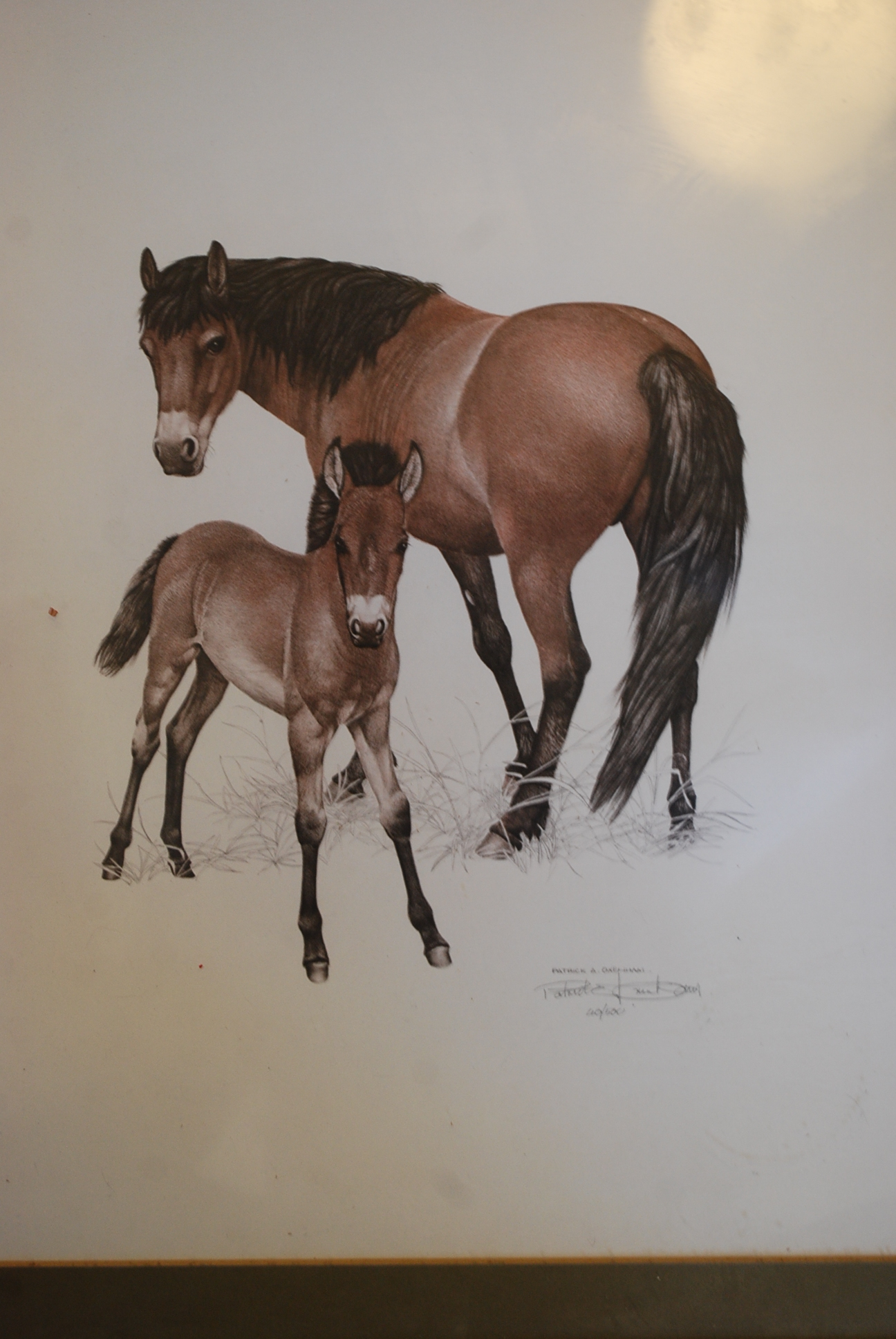 patrick oxenham a signed limited edition print of horses being