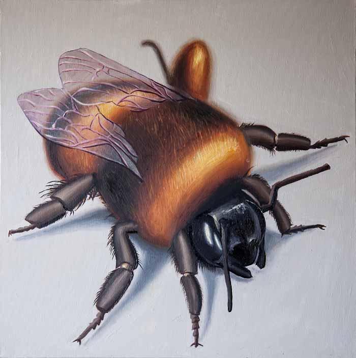 Caroline Elisabeth Gormley `Bee` Oil on canvas 60cm x 60cm signed reverse & unframed as intended
