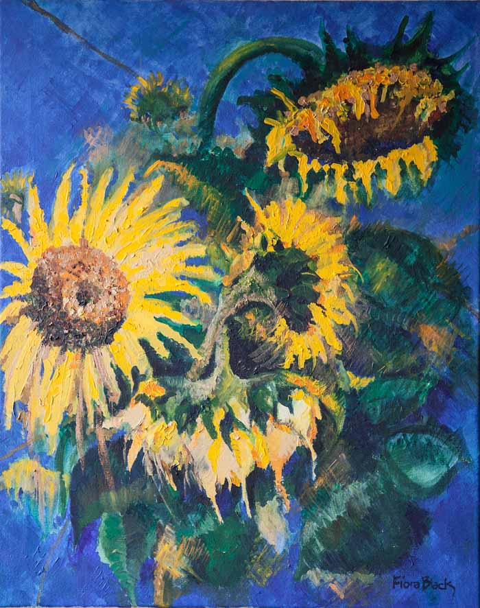 Fiona Black `Sunflowers` Oil on canvas 60cm x 76cm signed & unframed