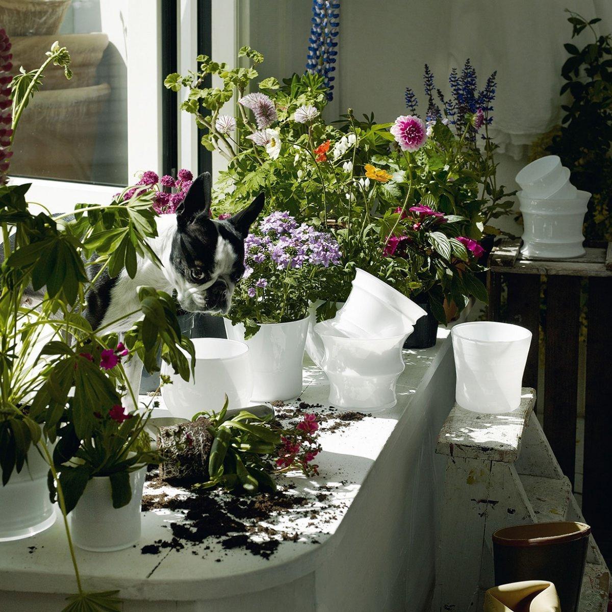 Vaso da fiori cocoon piccolo by holmegaard lovethesign for Fiori da vaso