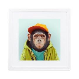 Stampa Chimpanzee Zoo Portraits