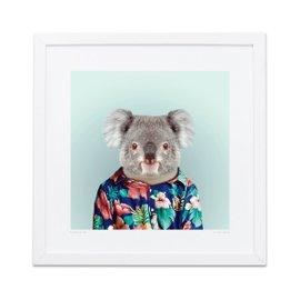 Stampa Koala Zoo Portraits