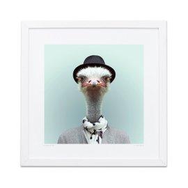 Ostrich Zoo Portraits print