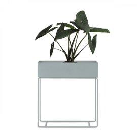 Cache vase Plant