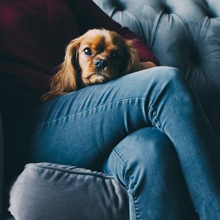 Al dente lovethesign - Comprare un divano ...