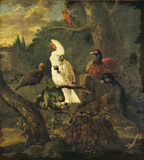 White Cockatoo and other Birds